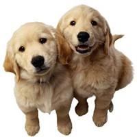 60+ Ülkemizin Evcil Hayvan Siteleri Listesi