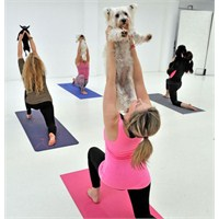 Köpeklerle Yapılan Yoga Duydunuzmu?
