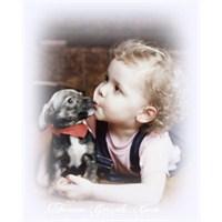 Evcil Hayvan Beslemenin Bize Yararları
