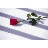Aşk Vurgunu…