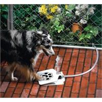 Evcil Hayvanınıza Her Zaman Temiz Su