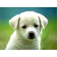 Yavru Köpek Eğitiminde Püf Noktalar