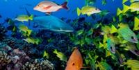 Denizlerde 19 Bin Çeşit Balık Olduğunu Duydunuz Mu
