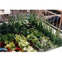 Sebze Yetiştiriciliği İçin Toprak Seçimi