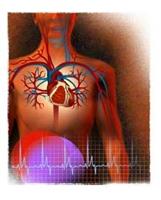 Kalp Yağlanmasına Bitkisel Kür