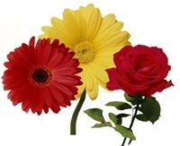 Hangi Çiçek Ne Anlama Geliyor…