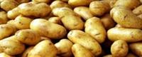 Bağırsak Kanserinin Tedavisi: Patates!