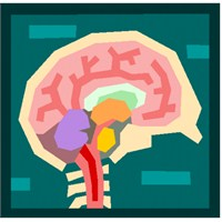 Öğrenmenin Fizyolojisi