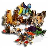 Vahşi İnsanlığın Evcil Ruhlu Dostları…