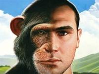 Konuşmanın Sırrı Maymun Ve İnsanın Ortak Geninde