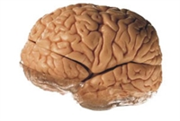 Beyninizi Kandırarak Kilo Verin