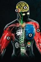 İnsan Vücudunda Merak Ettikleriniz