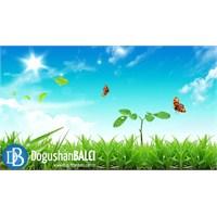 Ekolojideki Temel Kavramlar Nelerdir