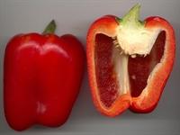 Red Pepper Nedir?