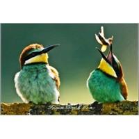 Gökyüzü Ressamı | Arı Kuşu