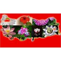 Çiçek Yetiştirmede Farklı Girişimlerle Başarılı Ol