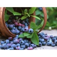 Antioksidanlar:bilberry (Yaban Mersini)