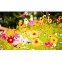 Çiçek Lisanı