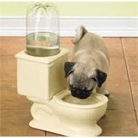 Köpek Tuvaletine Sira Gelmedi Mi Daha?