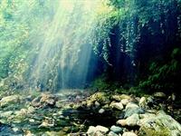 Oksijen Cenneti Kazdağları…
