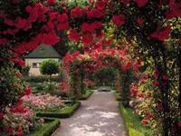 Bir Bahçe Düşünün
