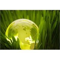 Yeşil Yaka – Sürdürülebilirlik Ve İk'nın Kesişimi
