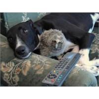 Baykuş İle Köpeğin Dostluğu!