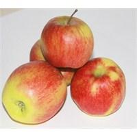 Kansere Karşı Elma