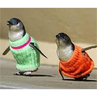 Penguenler Kazak Giyerse