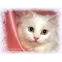 Can Dostumuz Kedilerin Gelişimi, Bakımı