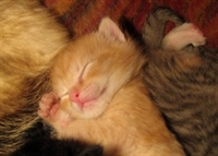 Önemli Bir Antioksidan: Uyku