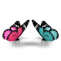 İki Kelebek