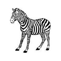 Zebra Stili Kosullu Formatlar
