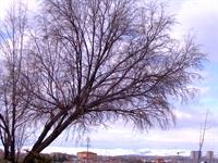 Şiir---ağaçlara Anlattım