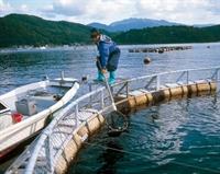 Moritanya da Ne Gibi İş Fırsatları Var ?