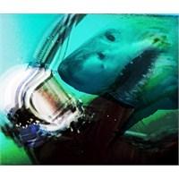 """Online Dinle: The Antlers """"Undersea"""""""