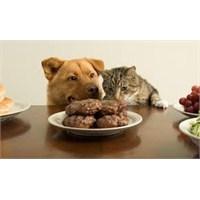 Kedisinin Tavuğundan Yiyen Kız