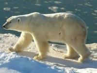 Kuzey Kutbu nun 20 Yılı Kaldı