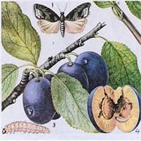 Meyve Çekirdeklerinin Faydaları Ve Zararları