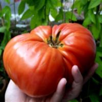 Hormonlu Gıda Nasıl Tanınır?