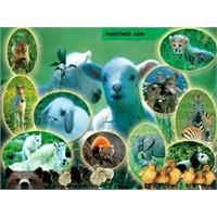 Dünyada Kaç Çeşit Hayvan Vardır?