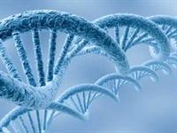 Ölümün Şifresi  telomer de Gizli