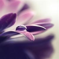 Olağanüstü Güzel Çiçek Fotoğrafları