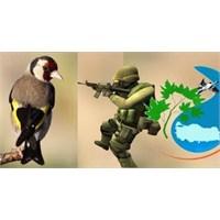 Saka Kuşları Tehlikede