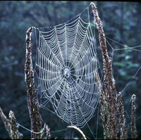 Örümcek Ağı Sırrı