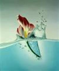 Çiçek Ve Suyun Hikayesi