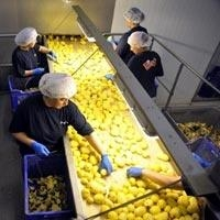 Patates Üretimini Üçe Katlayacak