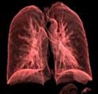 Karaciğer İçin Temizleme Kürü