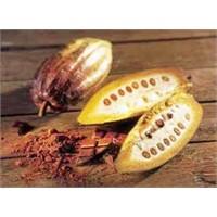 Kakaonun Sağlığa Faydaları Nelerdir?