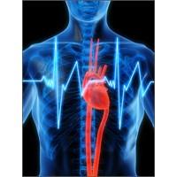 Kalbiniz Nasıl Atıyor ?